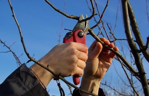 Tipos de poda de rboles frutales arboles frutales for Tipos de viveros frutales