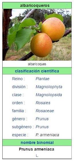albaricoquero