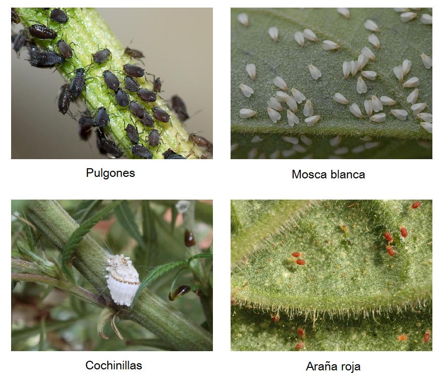 Plagas y enfermedades de los rboles frutales arboles frutales - Cuando se plantan los arboles frutales ...