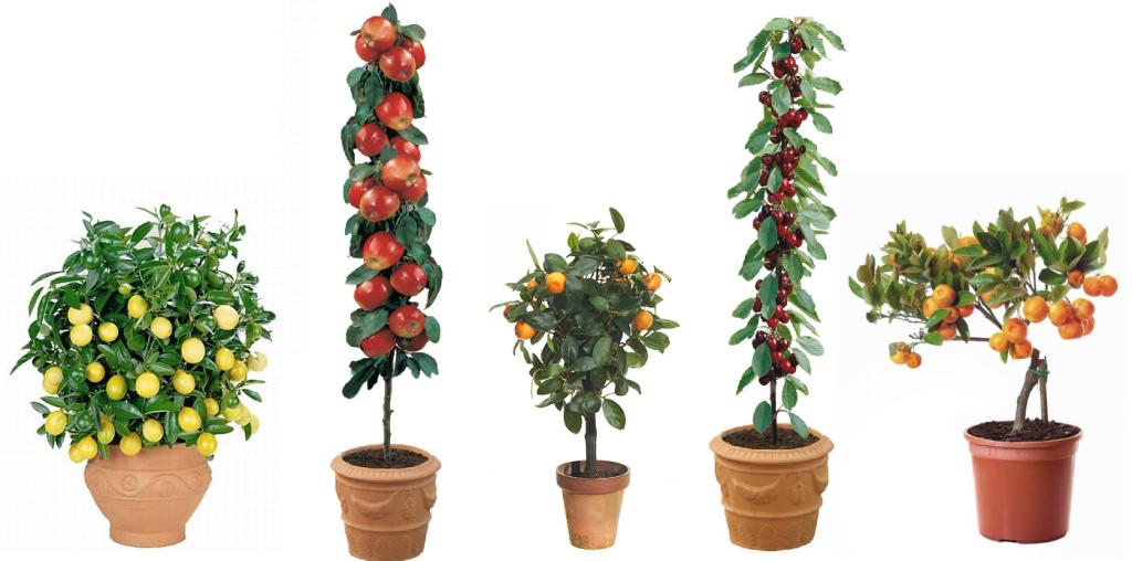 Conoce los rboles frutales enanos y sus peculiaridades - Arboles pequenos para jardin ...