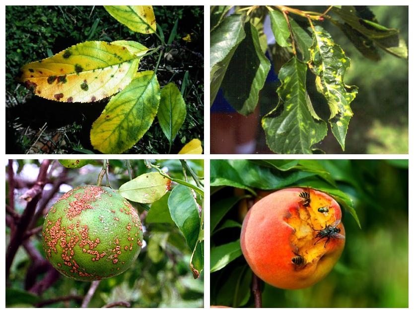 enfermedades arboles frutales
