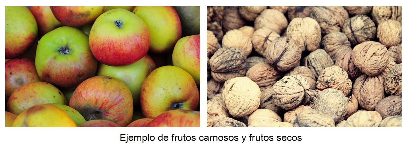 frutos carnosos y frutos secos