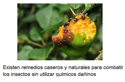 C mo cuidar los rboles frutales de los insectos arboles - Como cuidar los arboles frutales ...
