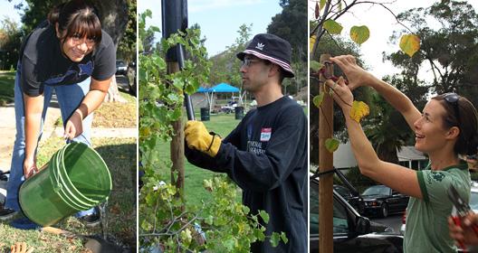 Cuidar los arboles frutales