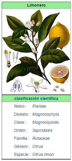 Limonero todo lo que debes saber arboles frutales for Limonero sin limones