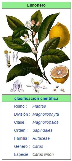 caracteristicas del limonero
