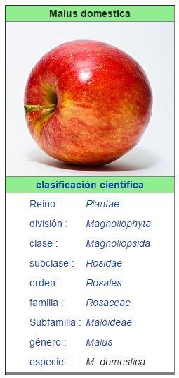 manzana domestica