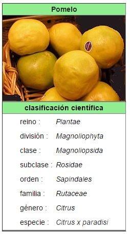 caracteristicas del pomelo