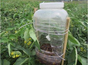 trampas para insectos