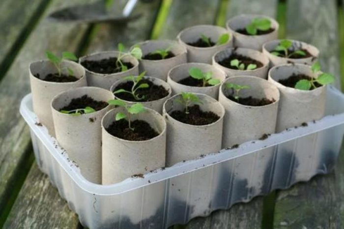 Semilleros de plantas