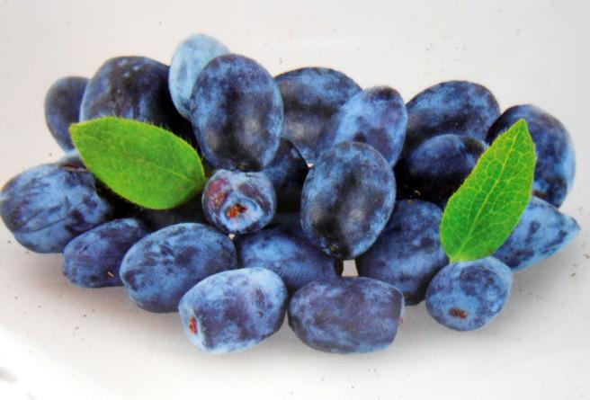 Baya de mayo fruto