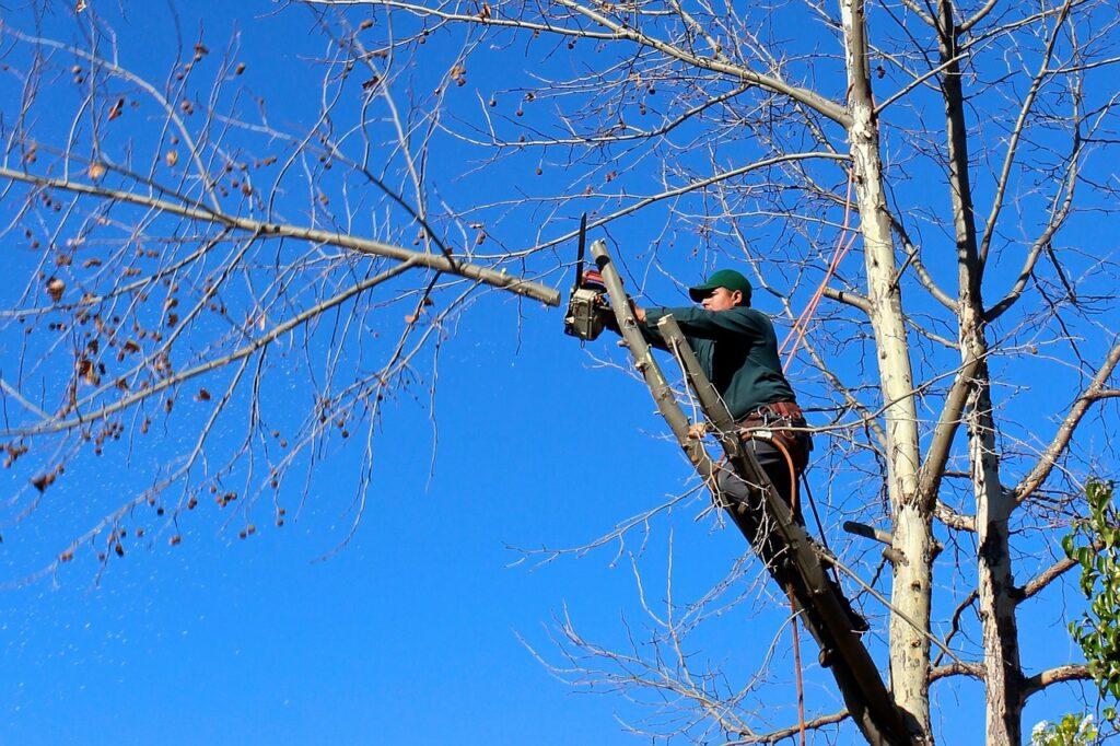 Cómo cortar un árbol correctamente