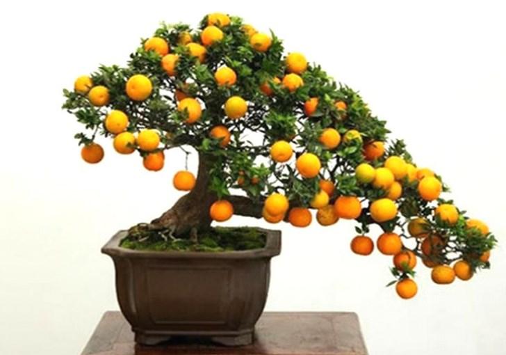 bonsáis frutales