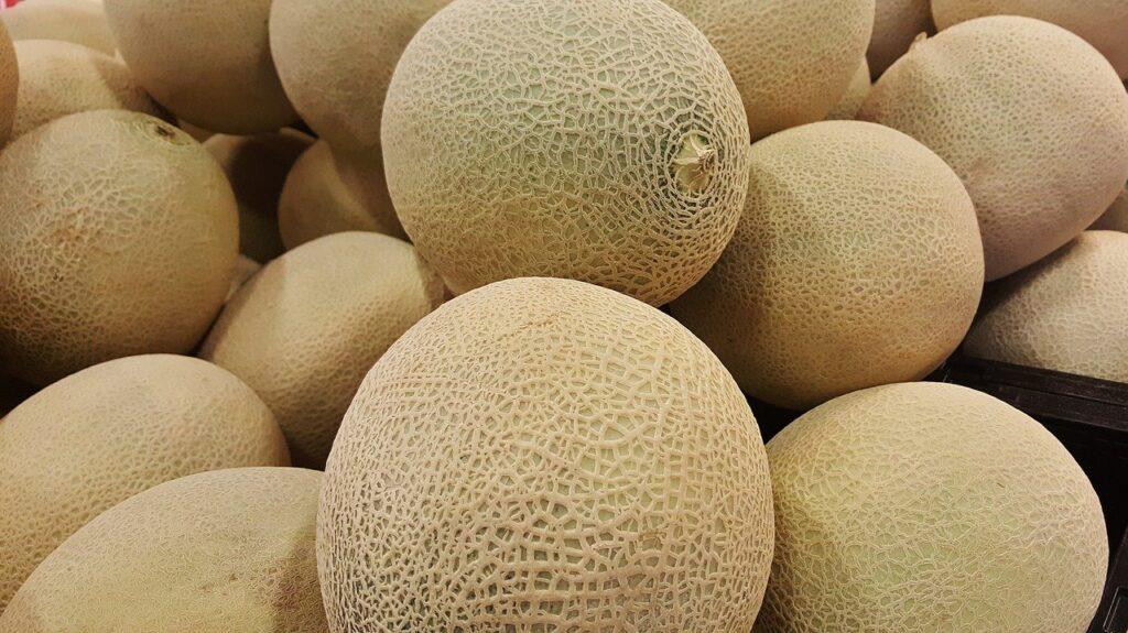 cultivar melón